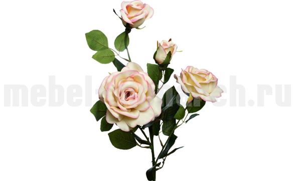 Роза чайная 9F27009M-4303