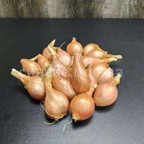 Лук-шалот крупноплодный Кубанский «Квочка» , 500 гр