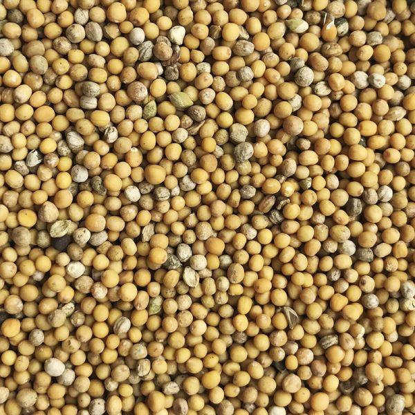 Семена горчицы белой, Украина