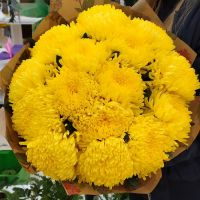 Желтые одноголовые хризантемы