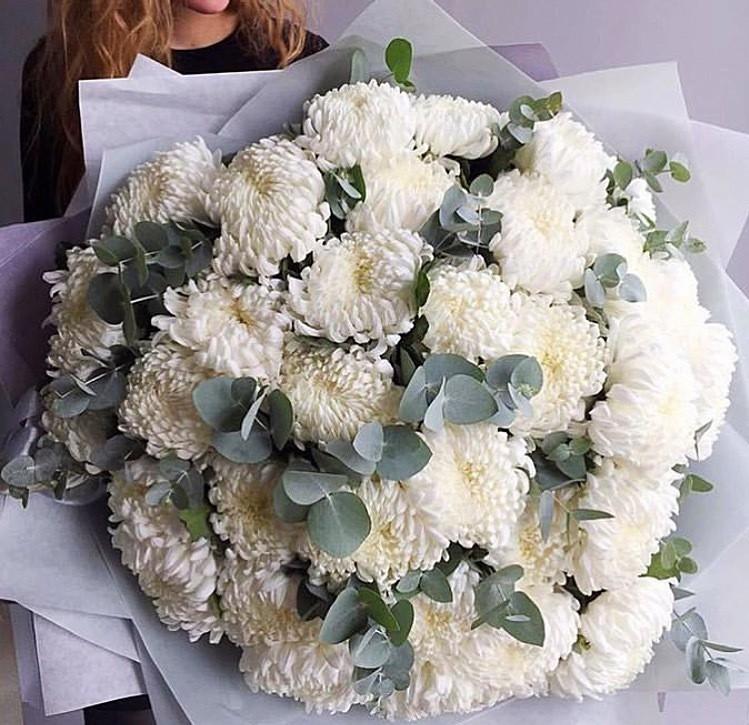 Белые одноголовые хризантемы