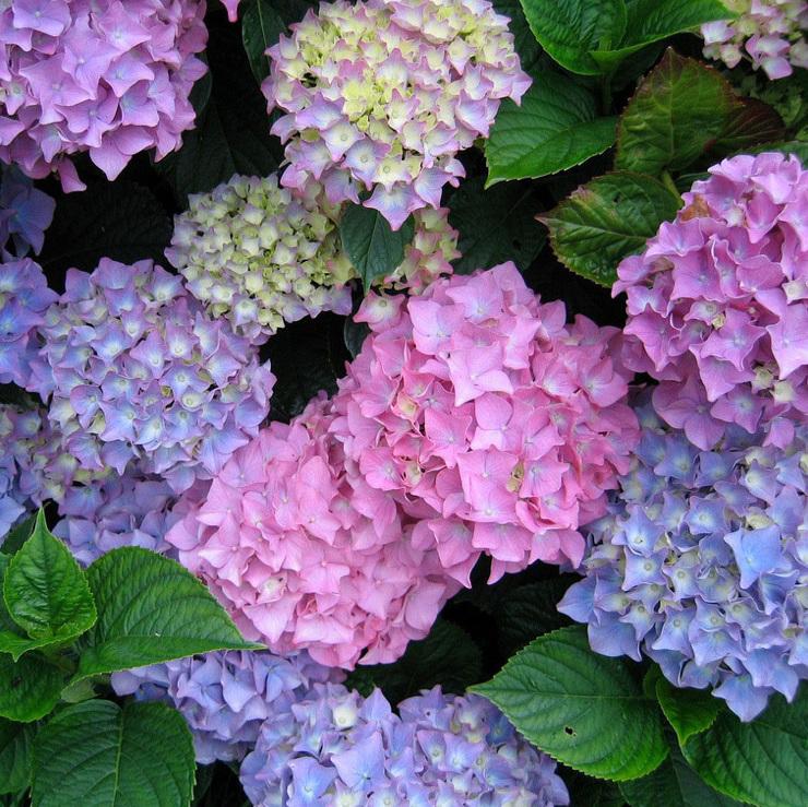 Подписка на цветы L Mono