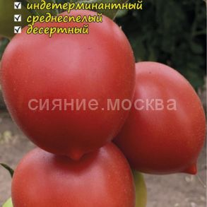 Томат Сызранская пимпочка, коллекционный Мязиной