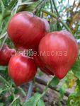 Tomat Podavlennoe serdce (Crushed Heart) Kollekcionnyj Myazinoj, 5 sht.