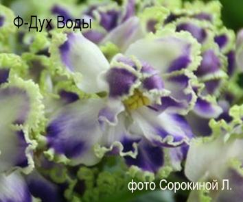 Ф-Дух Воды (Фиалковод)