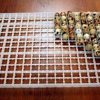 Лоток для перепелиных яиц 221 ячейка