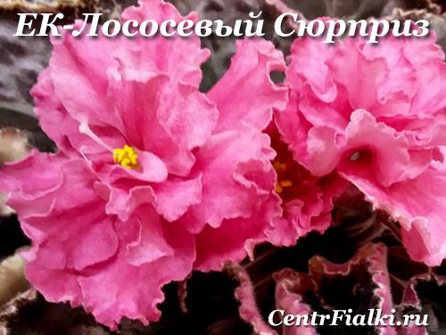 ЕК-Лососевый Сюрприз (Е.Коршунова)