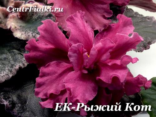 ЕК-Рыжий Кот (Е.Коршунова)