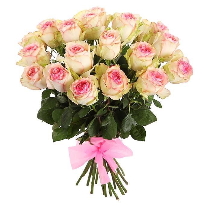 """21 розовая роза сорта """"Esperance"""""""