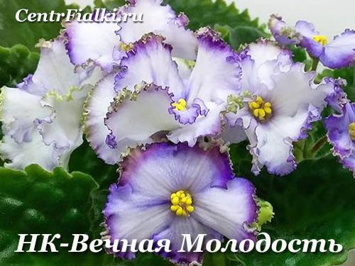 НК-Вечная Молодость (Н.Козак)