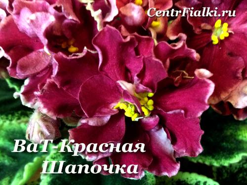 ВаТ-Красная Шапочка (Т.Валькова)