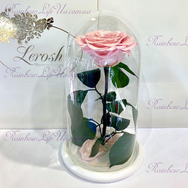 """Стабилизированная роза в колбе 27 см розовый перламутр """"Premium"""""""