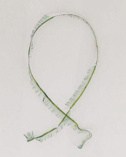 Лакоткань зеленая