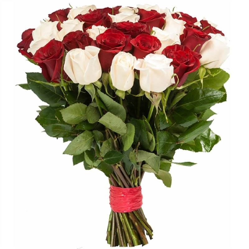 25 бело-красных роз 60 см, перевязанных атласной лентой