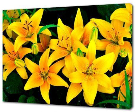 Картина на холсте Желтые орхидеи