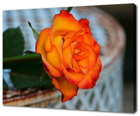 Картина на холсте Оранжевая роза