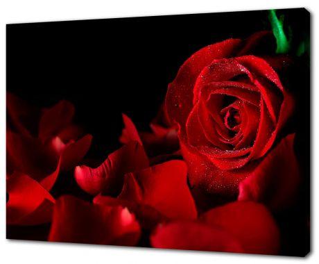 Картина на холсте Красные розы