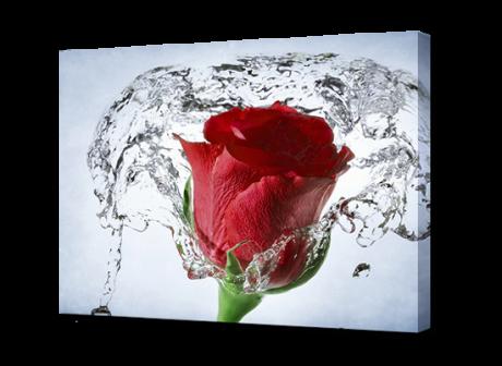Картина на холсте Роза в воде