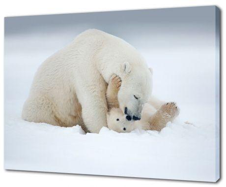 Картина на холсте Белые медведи