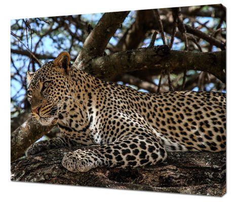 Картина на холсте Ягуар