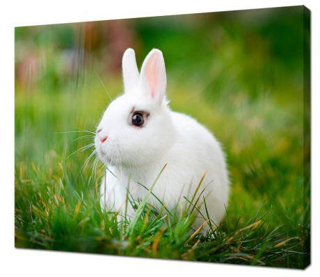 Картина на холсте Белый кролик