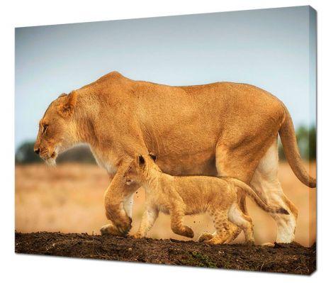 Картина на холсте Львица и львенок
