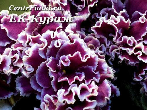 ЕК-Кураж (Е.Коршунова)