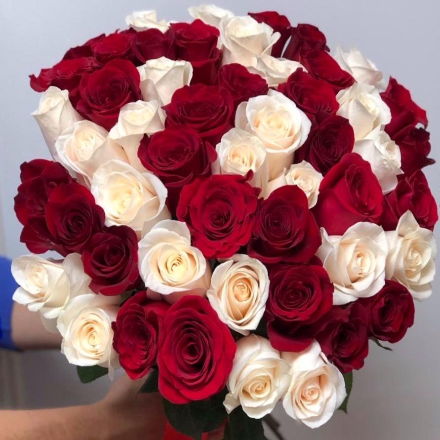 51 роза красный-белый