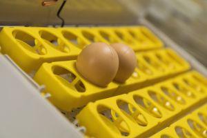 Инкубатор для яиц автоматический И-32