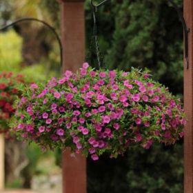 Ампельные растения в кашпо, 3 или 4л