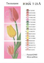 ЮМА-Т-23а. Тюльпаны