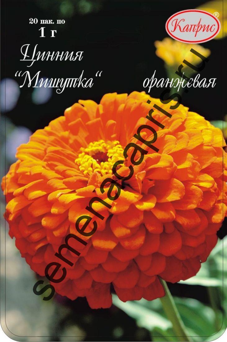 Цинния Мишутка Оранжевая (Каприс)