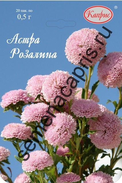 Астра Помпонная розовая Розалина (Каприс)