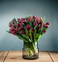 Тюльпаны махровые 51 шт.