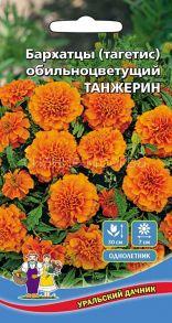 Бархатцы Танжерин (Уральский Дачник)