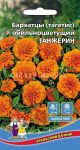 Barhatcy-Tanzherin-Uralskij-Dachnik
