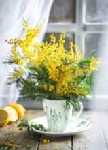 Postcard Golden mimosa