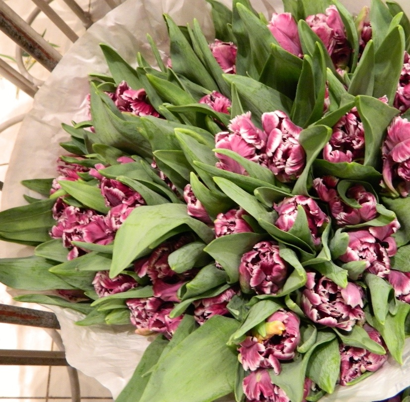 Тюльпаны сортовые Пэррот Принц 35 шт