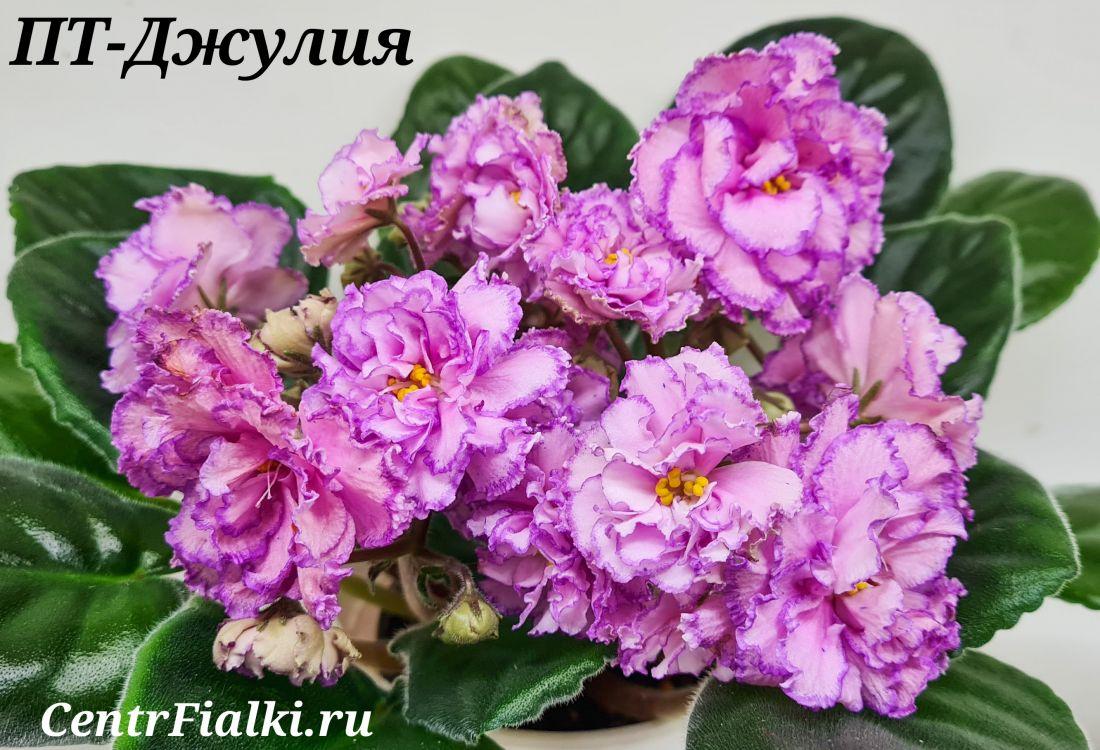 ПТ-Джулия (Т. Пугачева)