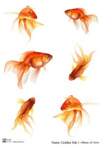 Golden fish 1