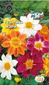 Георгина Мэри (СеДек)
