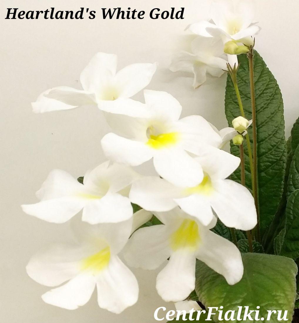 Heartland's White Gold