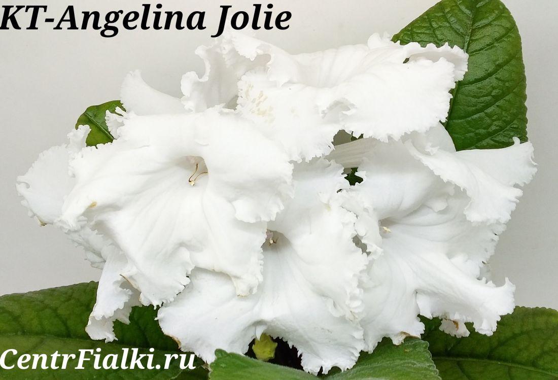 KT-Angelina Jolie (И.Кабанова/Е.Трофименко)