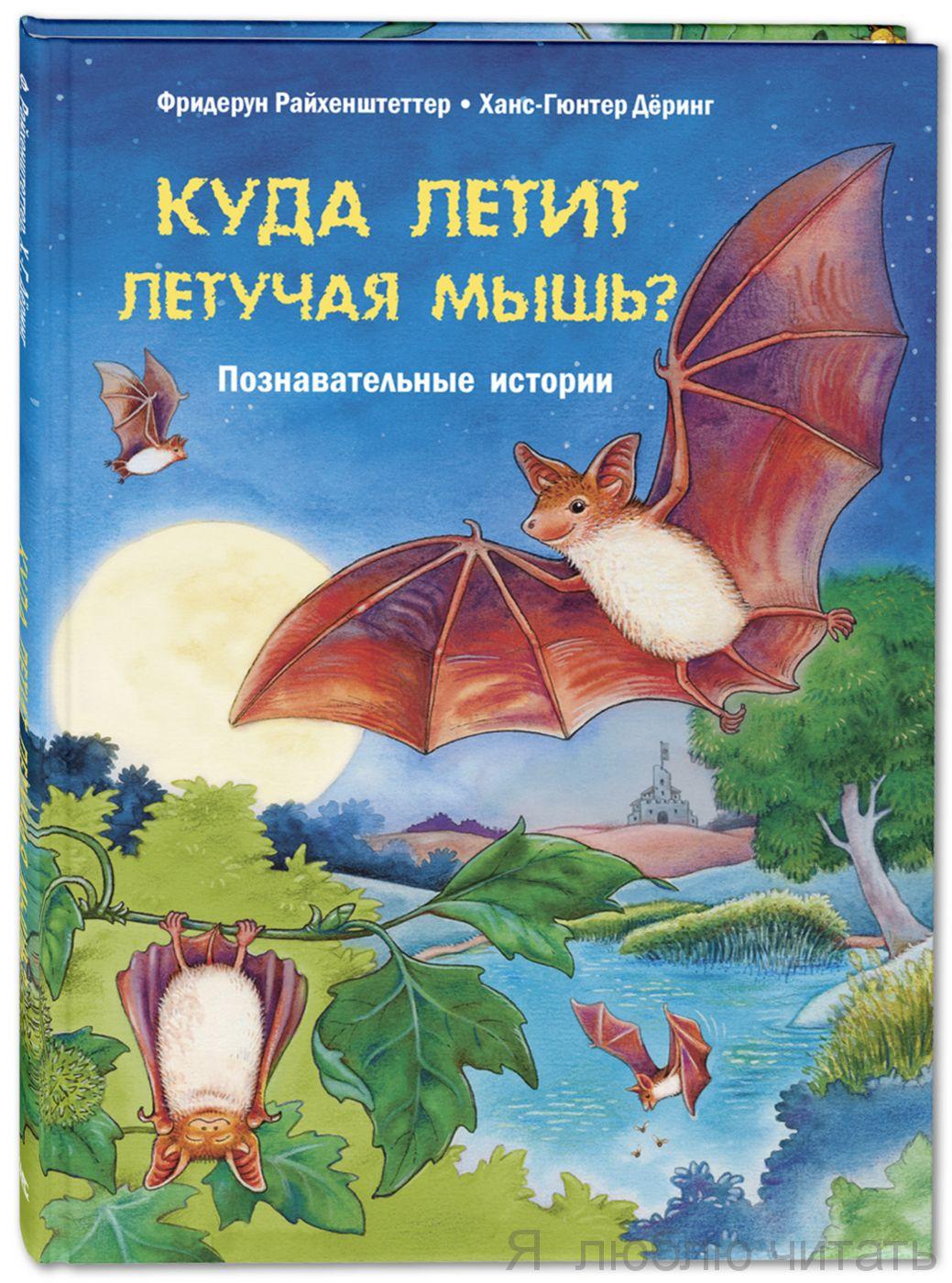 Куда летит летучая мышь? Познавательные истории