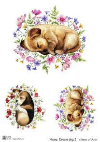Dream dog 2