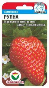 Земляника Руяна (Сибирский Сад)