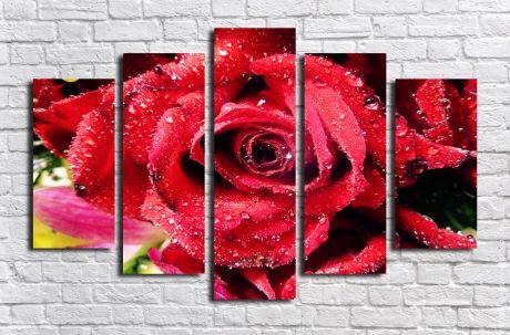 Модульная картина Роса на розе