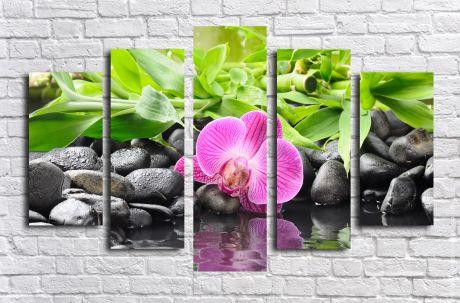 Модульная картина Орхидея на камнях