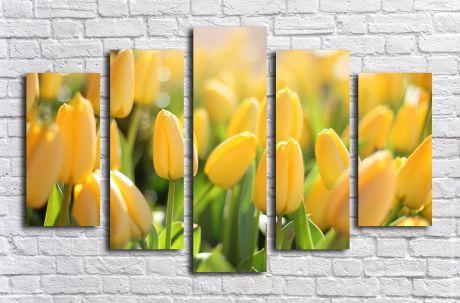 Модульная картина Поле желтых тюльпанов