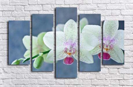Модульная картина Ветка орхидеи